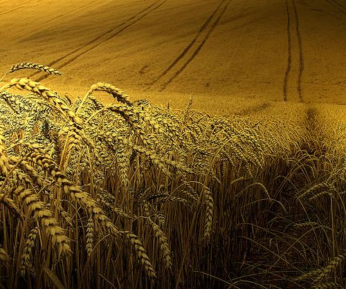 forgotten_harvest