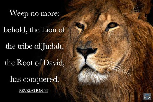 Lion of Tribe of Judah